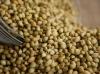 Graine de coriandre 2kg
