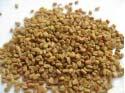 Graines de Fenugrec entières 100 gr à 2 kg